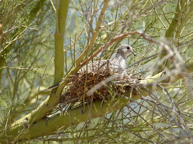 Aug 10 2014 Nesting 80