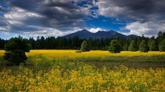 Flagstaff Meadows