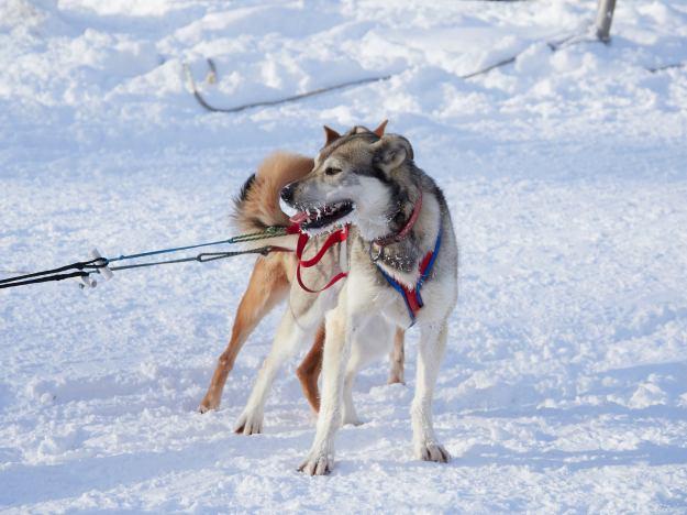 17-02-28 Alaska 0073