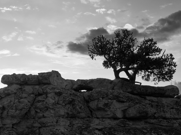 Tree and Rocks Monochrome